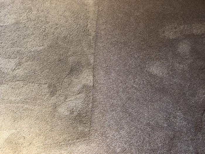 Pet Friendly Carpet Cleaner