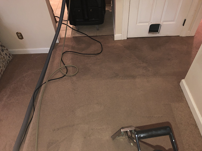 Anti-allergen Carpet Cleaning Products
