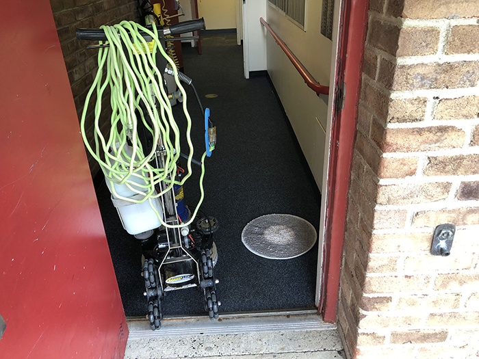 Enzyme Carpet Cleaner